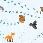 traces animaux